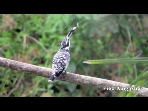 Birding Review 2015
